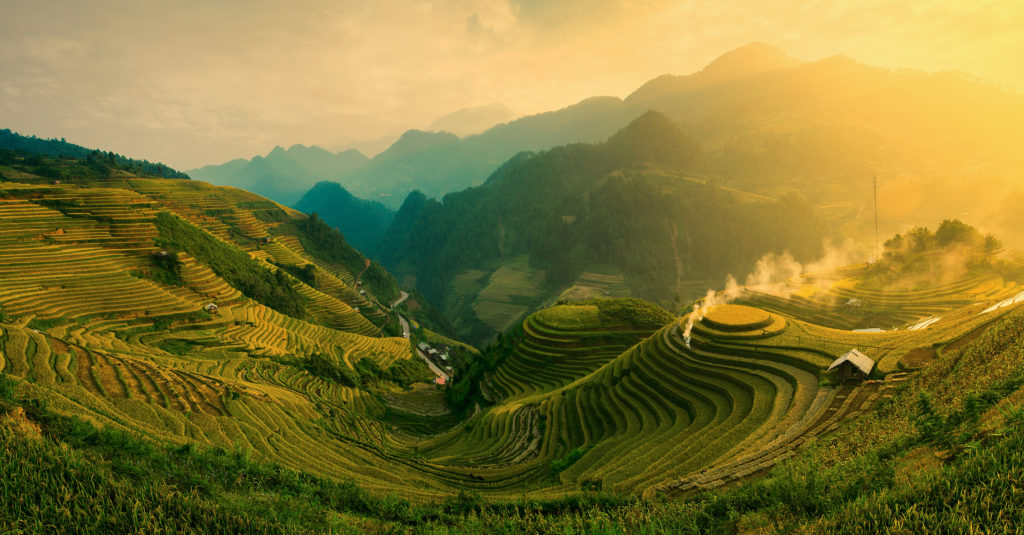 Rice fields on terraced of Mu Cang Chai , Vietnam.